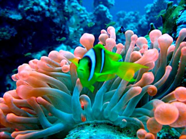 Tanino de algas marinhas escova progressiva Salvatore